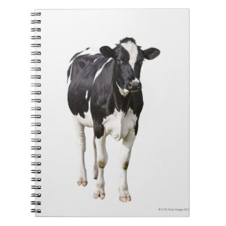 Dairy cow (Bos taurus) on white background Notebook