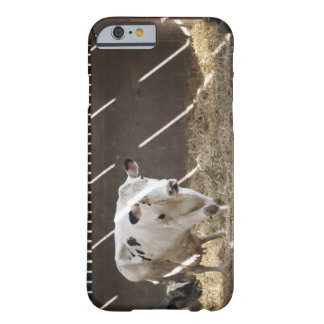 Dairy cow iPhone 6 case