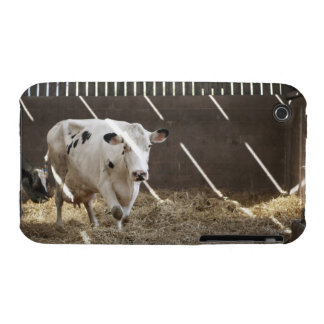 Dairy cow iPhone 3 covers