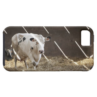 Dairy cow iPhone 5 cover