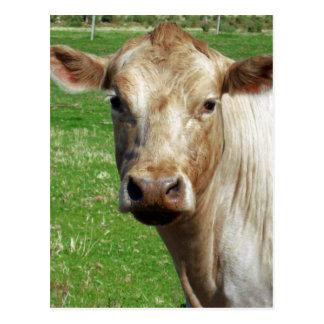 Dairy_Cow,_ Postcard