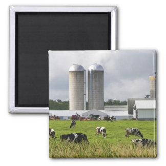Dairy cows and farm near Taylor County 2 Square Magnet