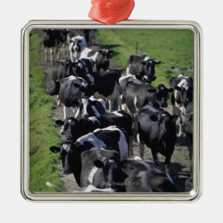 Dairy cows awaiting milking metal ornament