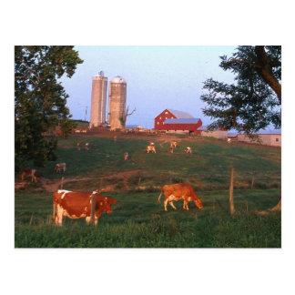 Dairy Farm Postcard