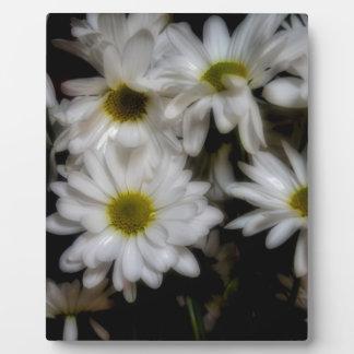 Daisies 1 plaque