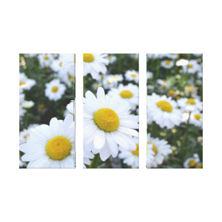Daisies Canvas Stretched Canvas Print