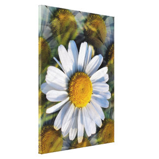 DAISIES STRETCHED CANVAS PRINTS