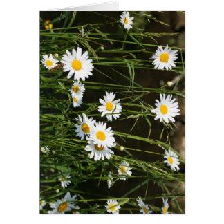 Daisies Card