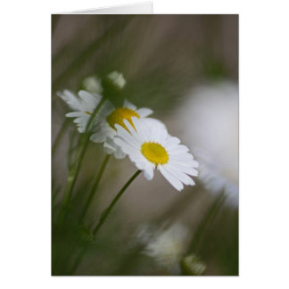 Daisies Greeting Cards