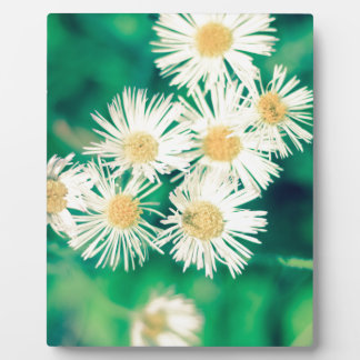 daisies crossprocessdaisies plaque