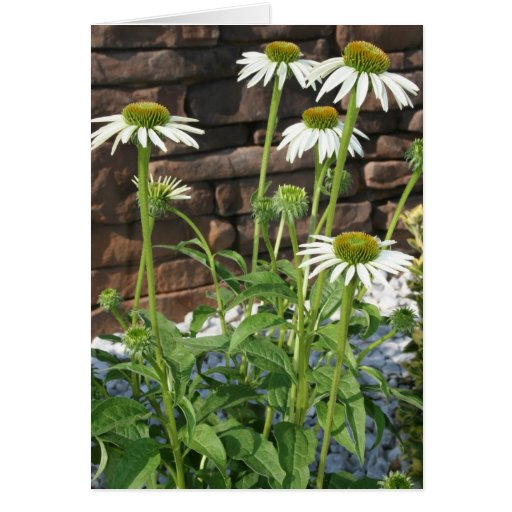 daisies flower picture gift card