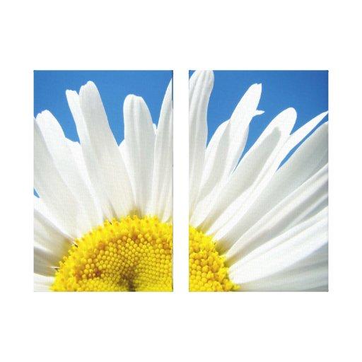 Daisies Flowers Floral Canvas art prints Daisy Canvas Prints
