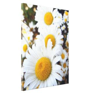 Daisies Gallery Wrap Canvas
