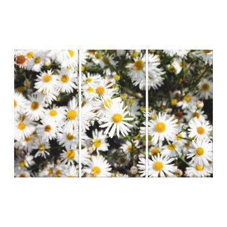 Daisies Gallery Wrap Canvas