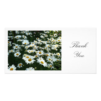 Daisies II - Thank You Photo Cards