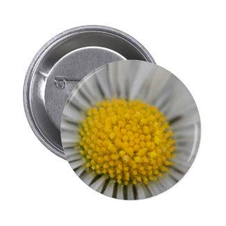 daisies in spring 6 cm round badge
