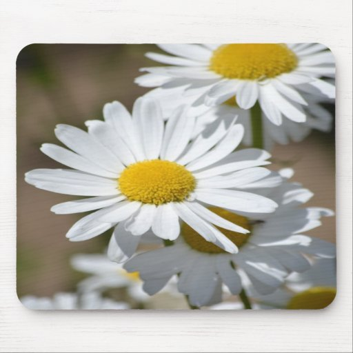 Daisies in Spring Mouse Pad