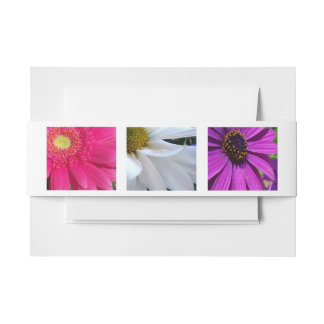 Daisies Invitation Belly Band