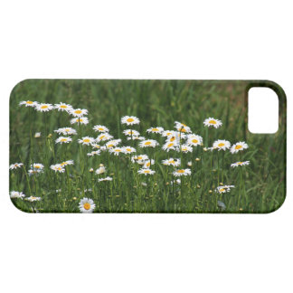 Daisies iPhone 5 Cases