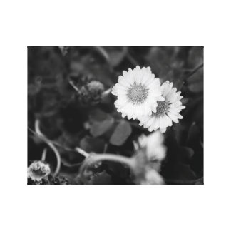 Daisies partners canvas print