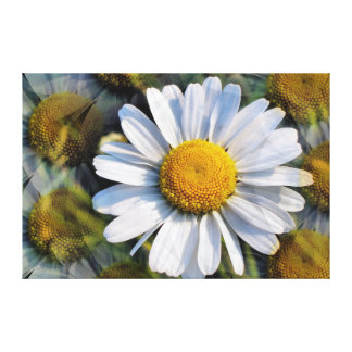 DAISIES STRETCHED CANVAS PRINT