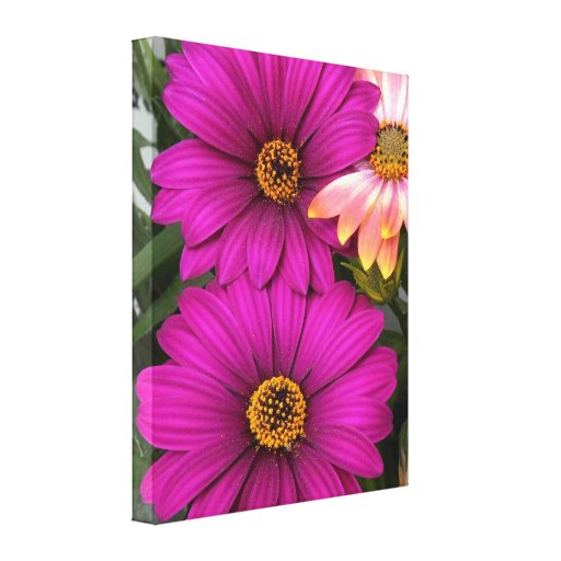 Daisies - wedge framework picture canvas prints