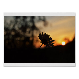 Daisy at sunset poster
