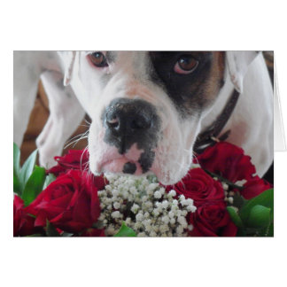 Daisy Belle Red Rose Bouquet Thank You Cards