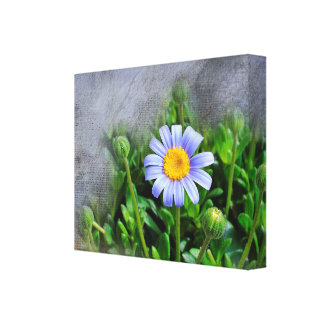 Daisy Bloom Stretched Canvas Prints