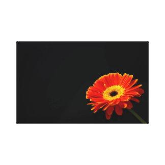 daisy canvas gallery wrap canvas