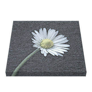 Daisy Gallery Wrapped Canvas