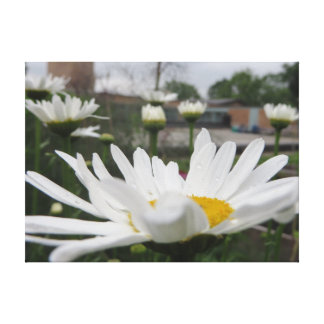 Daisy canvas gallery wrapped canvas