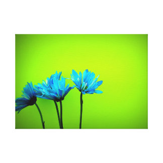 Daisy Stretched Canvas Prints