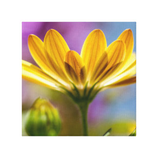Daisy Stretched Canvas Print