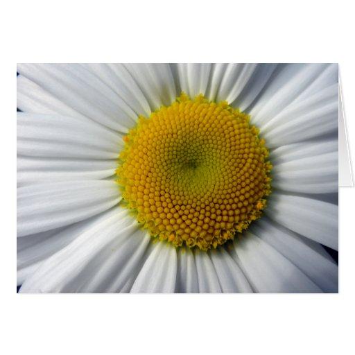 Daisy Close up Photo Greeting Card