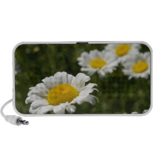 Daisy doodle travelling speaker
