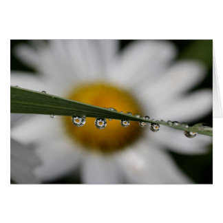 Daisy Drops nature photograph blank note card
