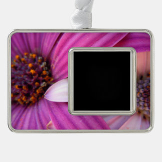 Daisy Duo Silver Plated Framed Ornament