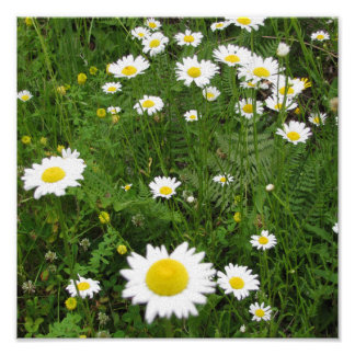 Daisy Field Canvas Poster