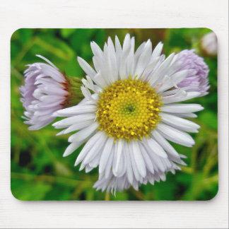 Daisy Fleabane Wildflower Mousepad