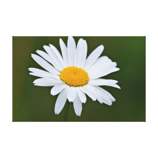 Daisy flower gallery wrap canvas