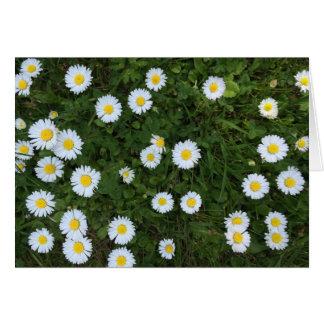 Daisy Flower Card