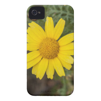 Daisy flower cu yellow Case-Mate iPhone 4 cases