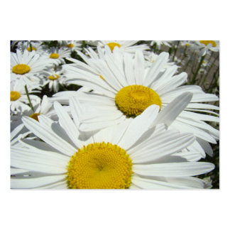 Daisy Flowers Appointment Cards Daisies Business Card Template