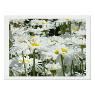 Daisy Flowers art prints White Daisies Floral Poster