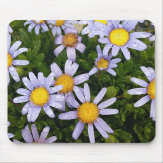 Daisy Flowers, White Yellow Flower, Nature Daisies Mouse Pad
