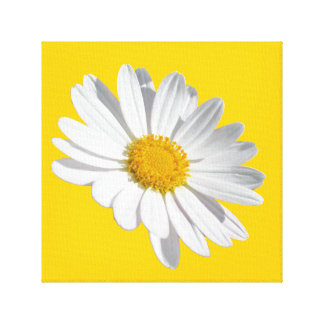Daisy Gallery Wrap Canvas