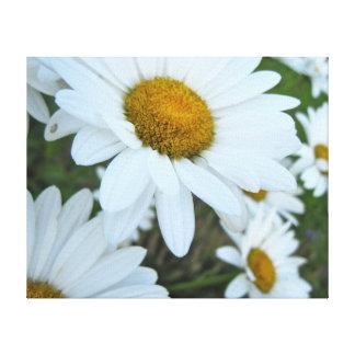 Daisy Garden Canvas Prints