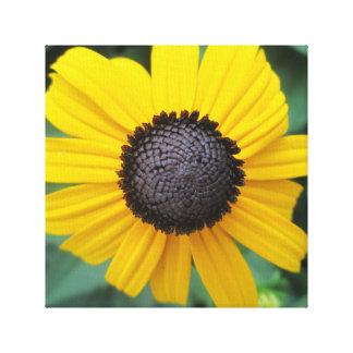 Daisy Garden Flower Gloriosa Canvas Prints