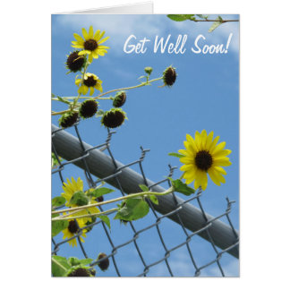 Daisy Get Well Soon Greeting Card